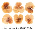 Set Heads Of Dried Pressed...