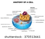 cell cross section structure... | Shutterstock .eps vector #370513661