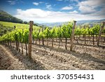Landscape Of Vineyard And...