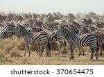 herd of plains zebra in the... | Shutterstock . vector #370654475