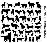 collection of dog vector   Shutterstock .eps vector #3707098