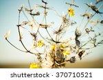 herbarium | Shutterstock . vector #370710521