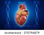 human heart   anatomy of human...   Shutterstock . vector #370796879