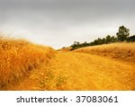 Rural Road With Dry Grass On...