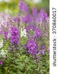 summer flowerbed of beautiful... | Shutterstock . vector #370860017