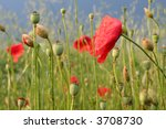 Wild summer flowers in meadow in a sunny day - stock photo
