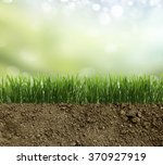 Growing Grass In The Earth Soil