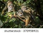 Family of common squirrel...