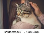 Stock photo pets care young woman holding cat home cute cat watching and looking on woman s arm in home 371018801