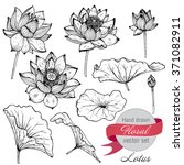 Stock vector vector set of hand drawn lotus flowers and leaves sketch floral botany collection in graphic black 371082911