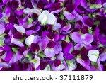 pea flowers arranged as a... | Shutterstock . vector #37111879
