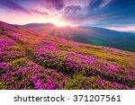 summer morning scene of... | Shutterstock . vector #371207561