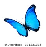 color butterfly  isolated on... | Shutterstock . vector #371231335