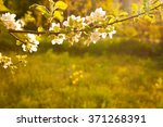 Spring Background Of Branches...