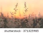 dry grass sky summer sunset... | Shutterstock . vector #371325985