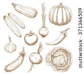 healthy garden tomato  sprouted ... | Shutterstock .eps vector #371366509
