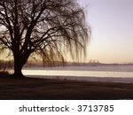 Willow Tree Winter Sunrise