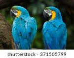 Two Vivid And Colorful Ara...