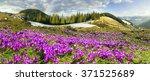ukraine  wild montenegrin... | Shutterstock . vector #371525689