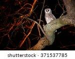 Largest African Owl  Verreaux'...