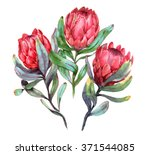 hand drawn watercolor... | Shutterstock . vector #371544085