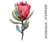 hand drawn watercolor... | Shutterstock . vector #371544205