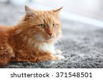 Fluffy Red Cat Lying On A Carpet