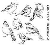 birds set ink drawn illustration | Shutterstock .eps vector #371637055