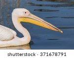 Pelican Head And Shoulders. A...