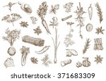 herb and spices set | Shutterstock . vector #371683309