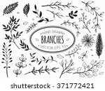 hand drawn vintage floral... | Shutterstock .eps vector #371772421