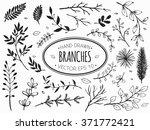 hand drawn vintage floral... | Shutterstock .eps vector #371772421