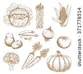 Sketches Of Farm Sweet Corn ...