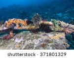 tropical fish  corals and... | Shutterstock . vector #371801329