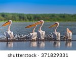 a group of pelicans in the...   Shutterstock . vector #371829331