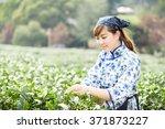 asian pretty tea picking girl... | Shutterstock . vector #371873227