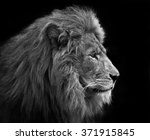 Lion  Black And White Head Sho...