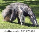 anteater  | Shutterstock . vector #371926585