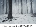Fog And Snow In Winter Forest