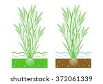 young rice plant with  leaves... | Shutterstock .eps vector #372061339
