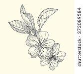apple blossom sketch    Shutterstock .eps vector #372089584