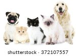 Stock photo cute cats and dogs isolated on white 372107557