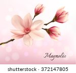 branch with two pink magnolia... | Shutterstock .eps vector #372147805