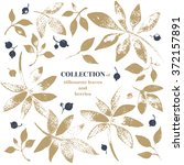 collection of leaves and... | Shutterstock .eps vector #372157891
