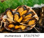 Mussel Is The Common Name Used...