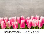 tulips on the grey  background. | Shutterstock . vector #372175771