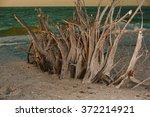 beach in sarasota  florida | Shutterstock . vector #372214921