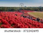 ibaraki  japan   october 18 ... | Shutterstock . vector #372242695