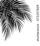 Palm Leaf Vector Background...