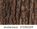 Tree Bark Photo  Tree Bark ...